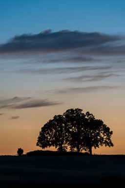 DL_20150704_DSC5287-Oregon-Oak-Trees-at-Sunset