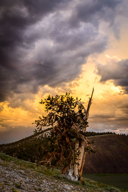 DL_20160630_DSC0694-Eastern-Sierra-White-Mountains
