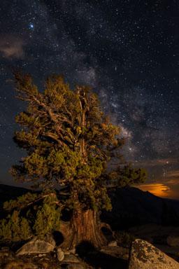 DL_20160820_DSC1503-ME-Yosemite-Juniper-Tree-Milkyway