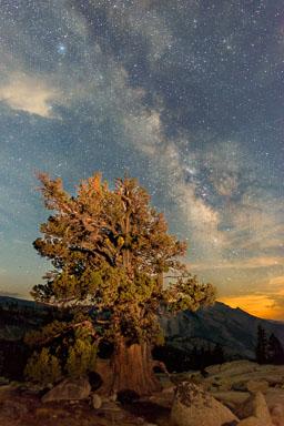 DL_20160820_DSC1577-ME-Yosemite-Juniper-Tree-Stars