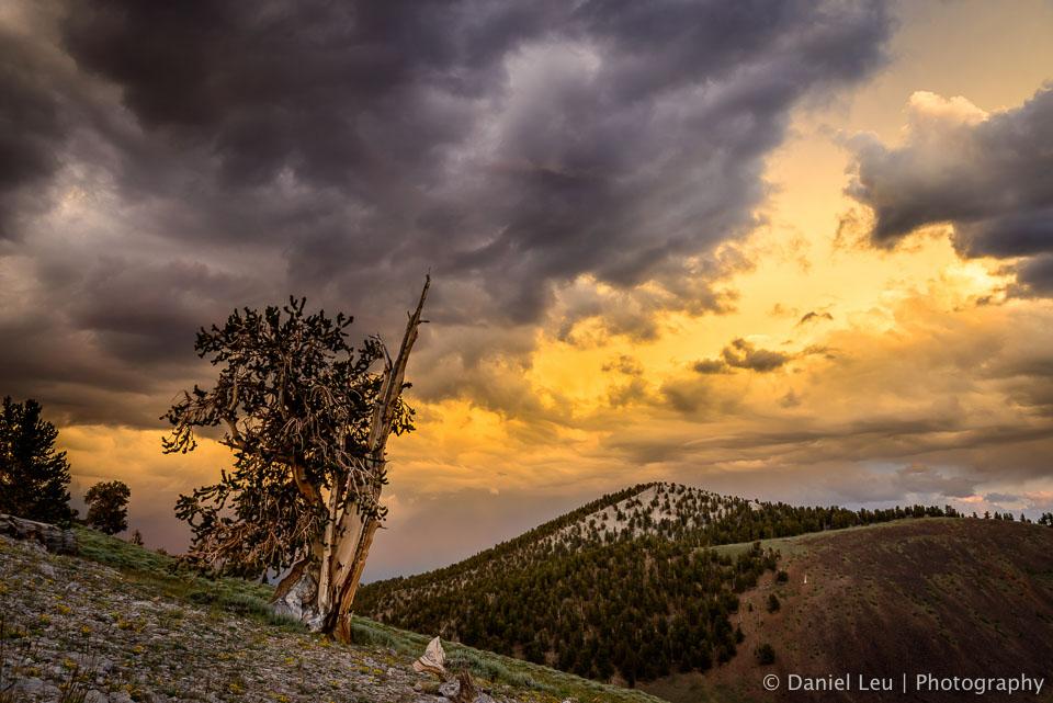 DL_20160630_DSC0691-Eastern-Sierra-White-Mountains.jpg