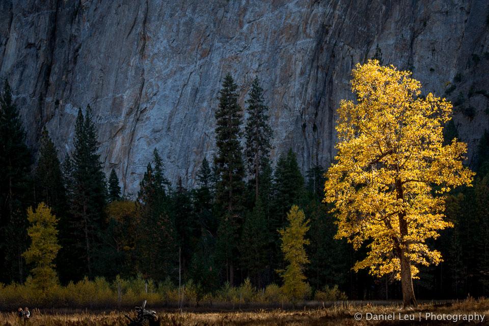 Yosemite_DL_20121103_DSC1042.jpg