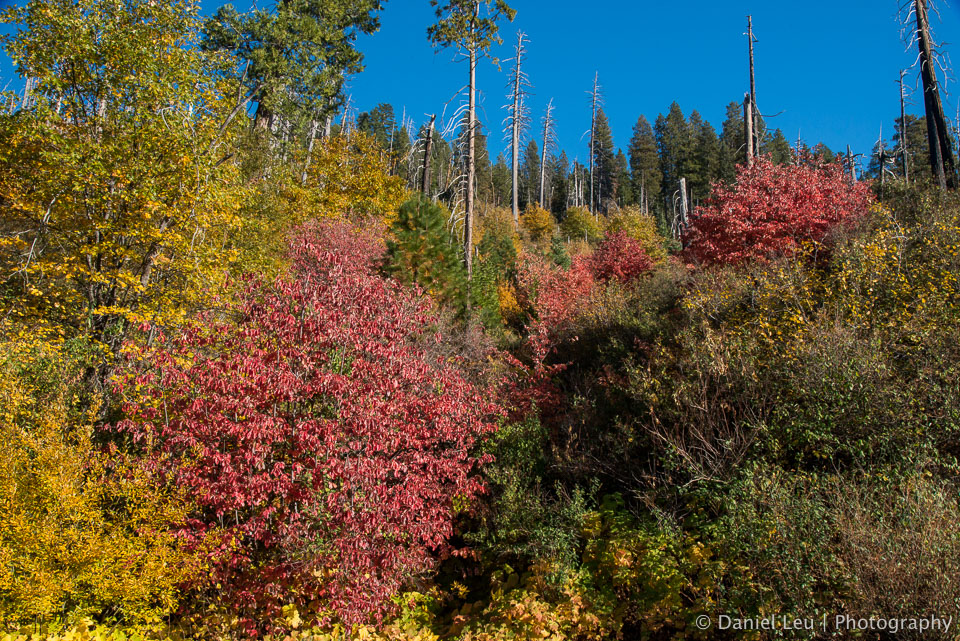 Yosemite_DL_20121103_DSC1080-Edit.jpg